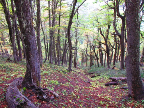 Cerro Mallo Trail in San Martin De Los Andes